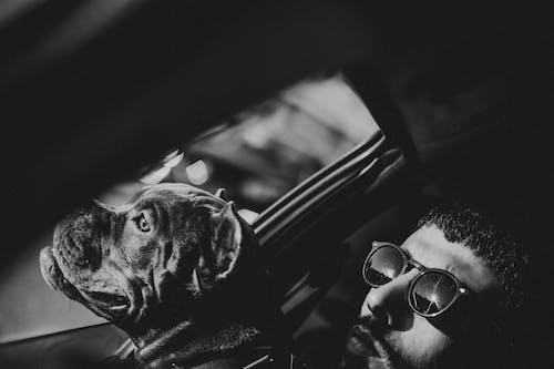 Free stock photo of altın rengi Güneş, araba fotoğrafçılığı, beyaz ve siyah, bulldog