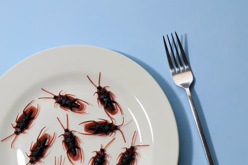 Cockroaches on Plate