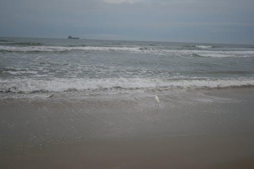 Free stock photo of baywatch, ocean, sea