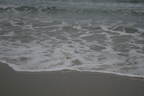 Free stock photo of beach, beach safety, ocean