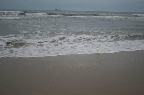 Free stock photo of deep ocean, deep sea, ocean