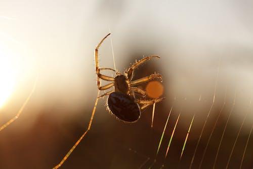 거미, 거미류, 거미줄, 게겐 다스 리 히트의 무료 스톡 사진