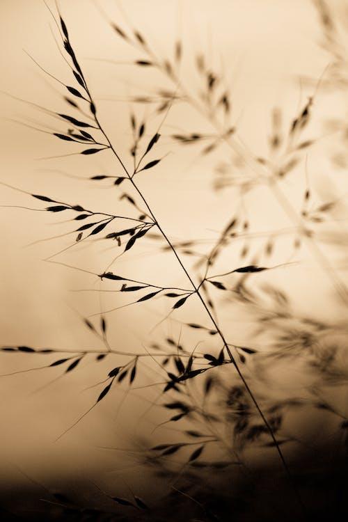 가을, 건조한, 게겐 다스 리 히트, 관념적인의 무료 스톡 사진