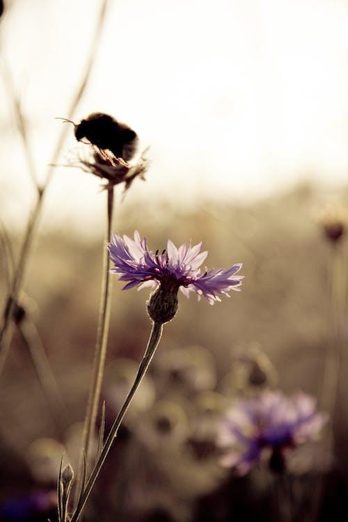 건초지, 게겐 다스 리 히트, 곤충, 꽃의 무료 스톡 사진
