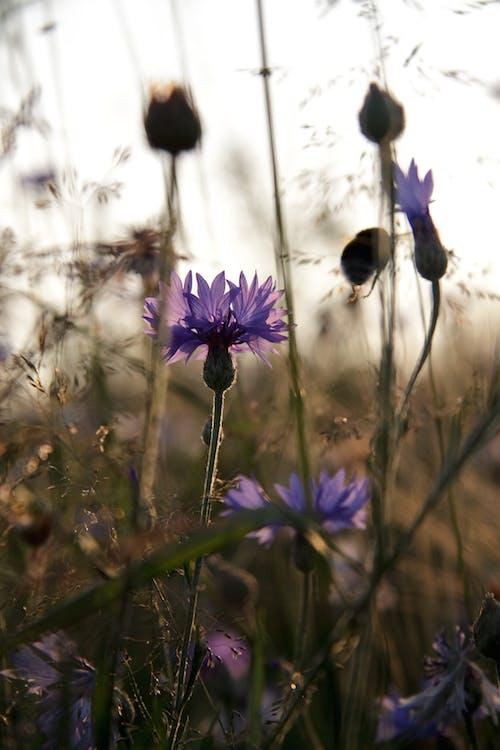 건초지, 게겐 다스 리 히트, 공원, 꽃의 무료 스톡 사진