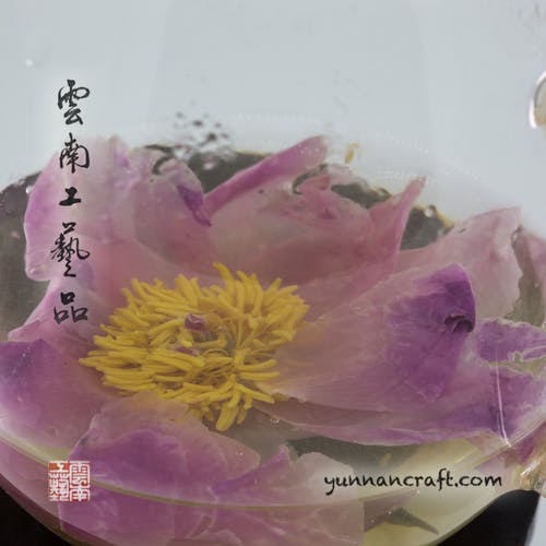 Free stock photo of peony flower tea