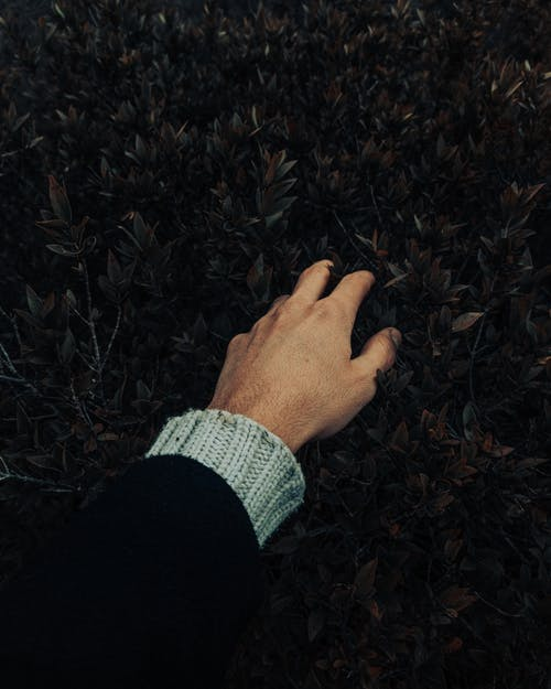 Hand of anonymous person in sweater touching green leaves of lush bush with branches while standing in garden in countryside