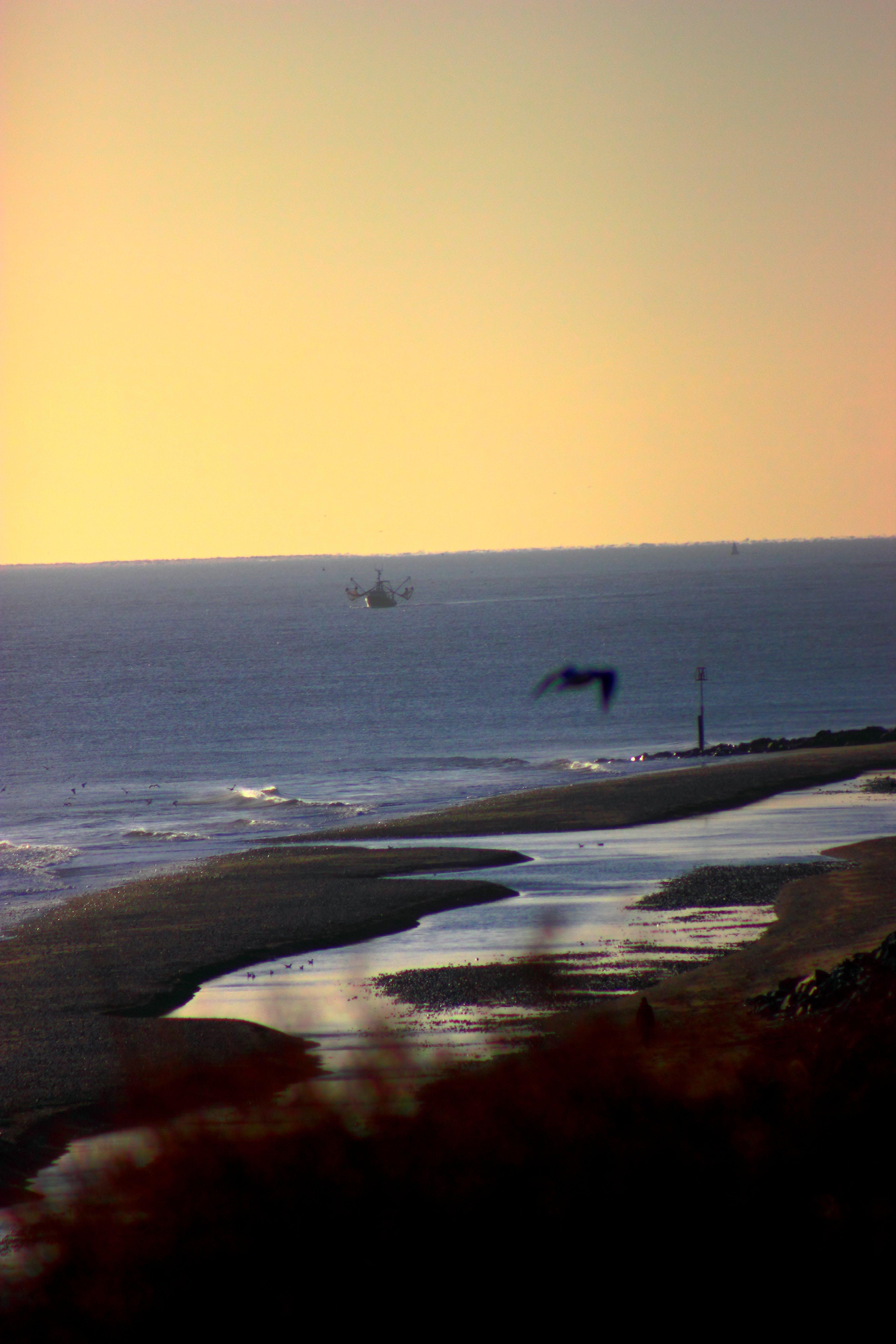 Free stock photo of birds, fishing boat, sea, sunrise