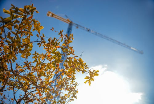 Blue Tower Crane Beside Tree