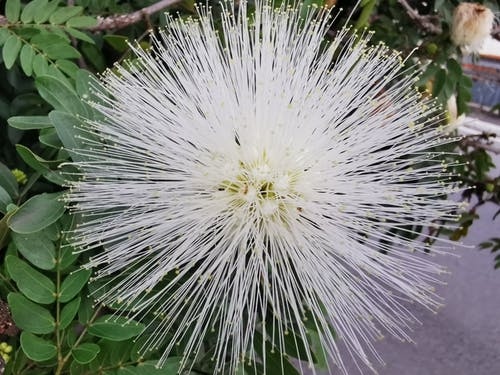 Free stock photo of branco, flor, planta, verde