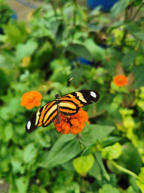 Free stock photo of borboleta, flor, planta, verde