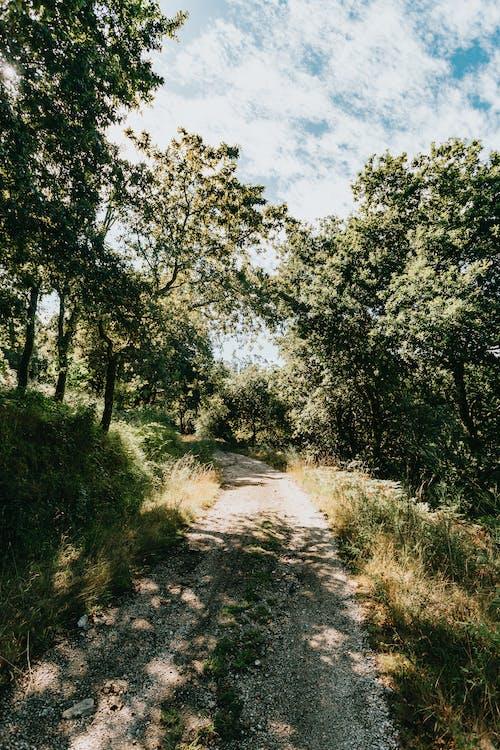 Foto profissional grátis de aconselhamento, ao ar livre, árvore, estrada