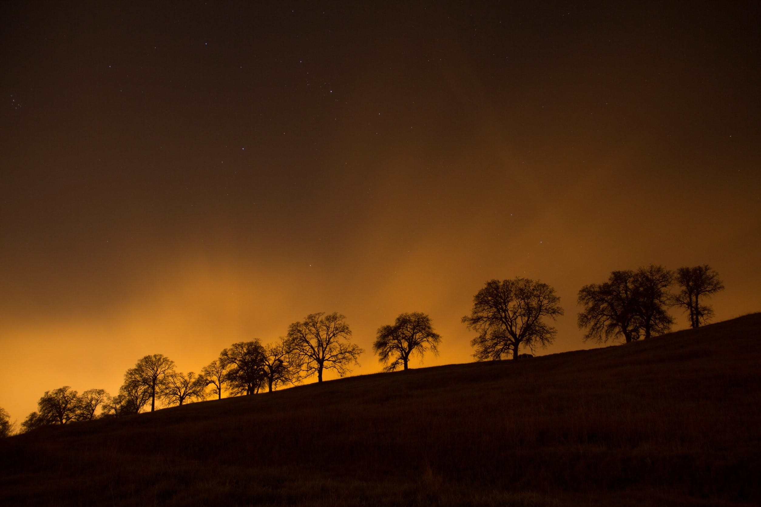 Free stock photo of sky, night, trees, silhouette
