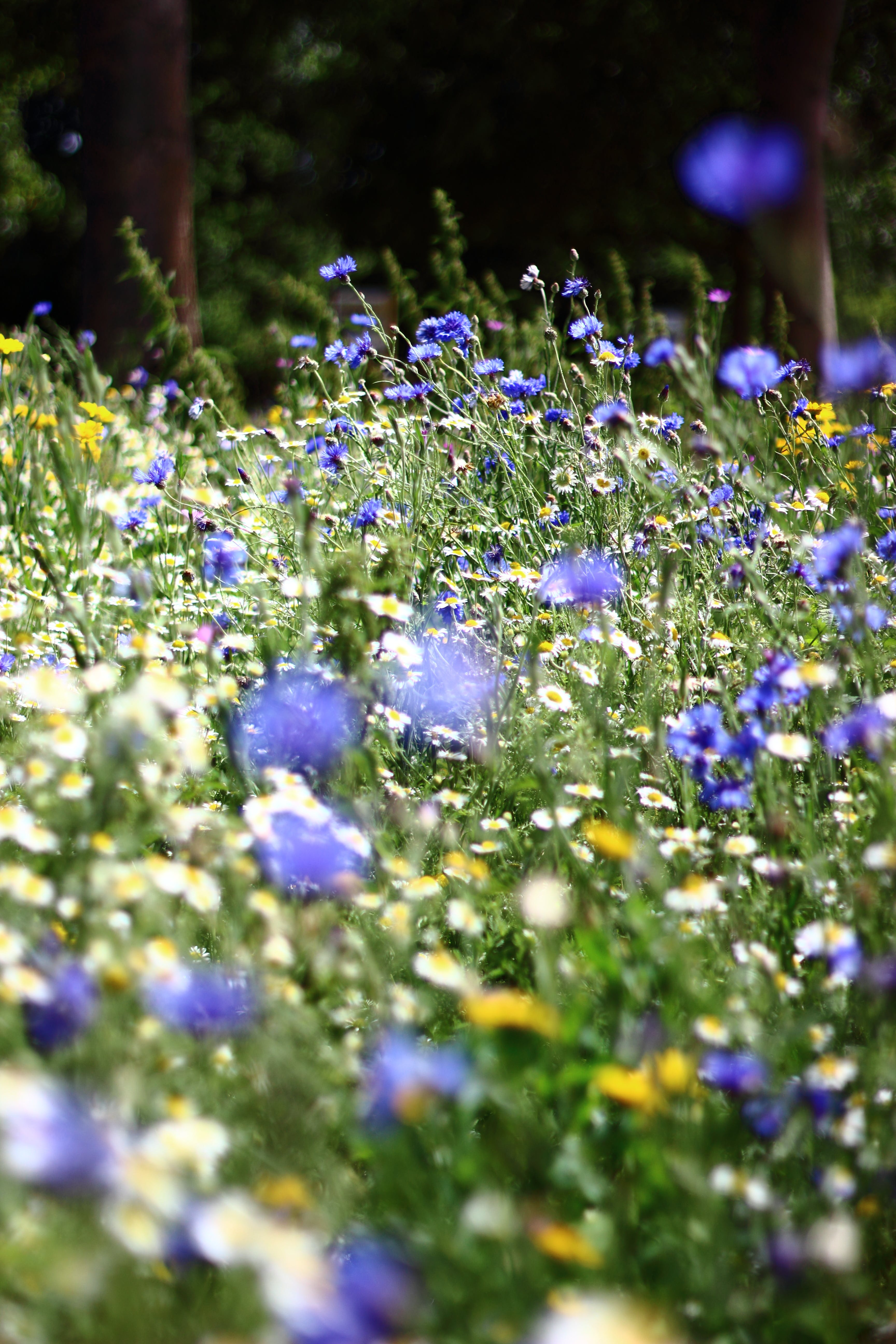 Free stock photo of flowers, meadow, summer, wild flowers