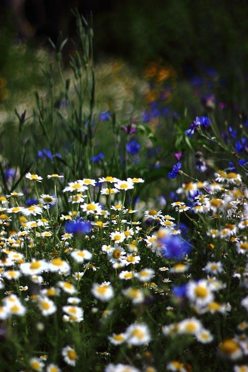 Free stock photo of flowers, wild flowers