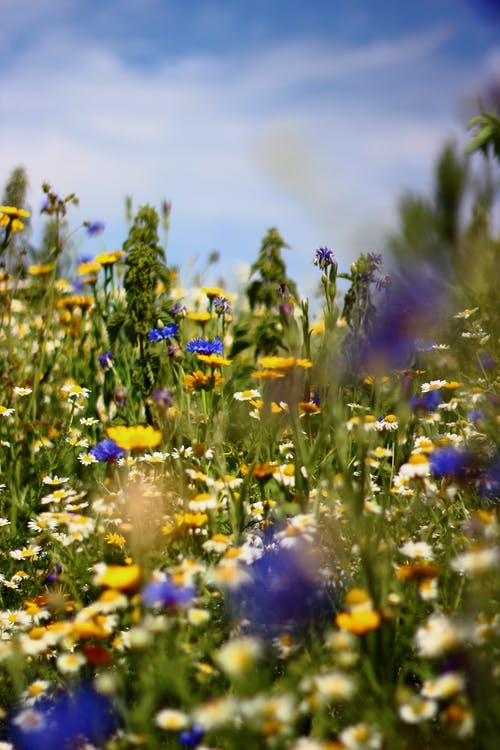 Free stock photo of flowers, sky, summer, wild flowers