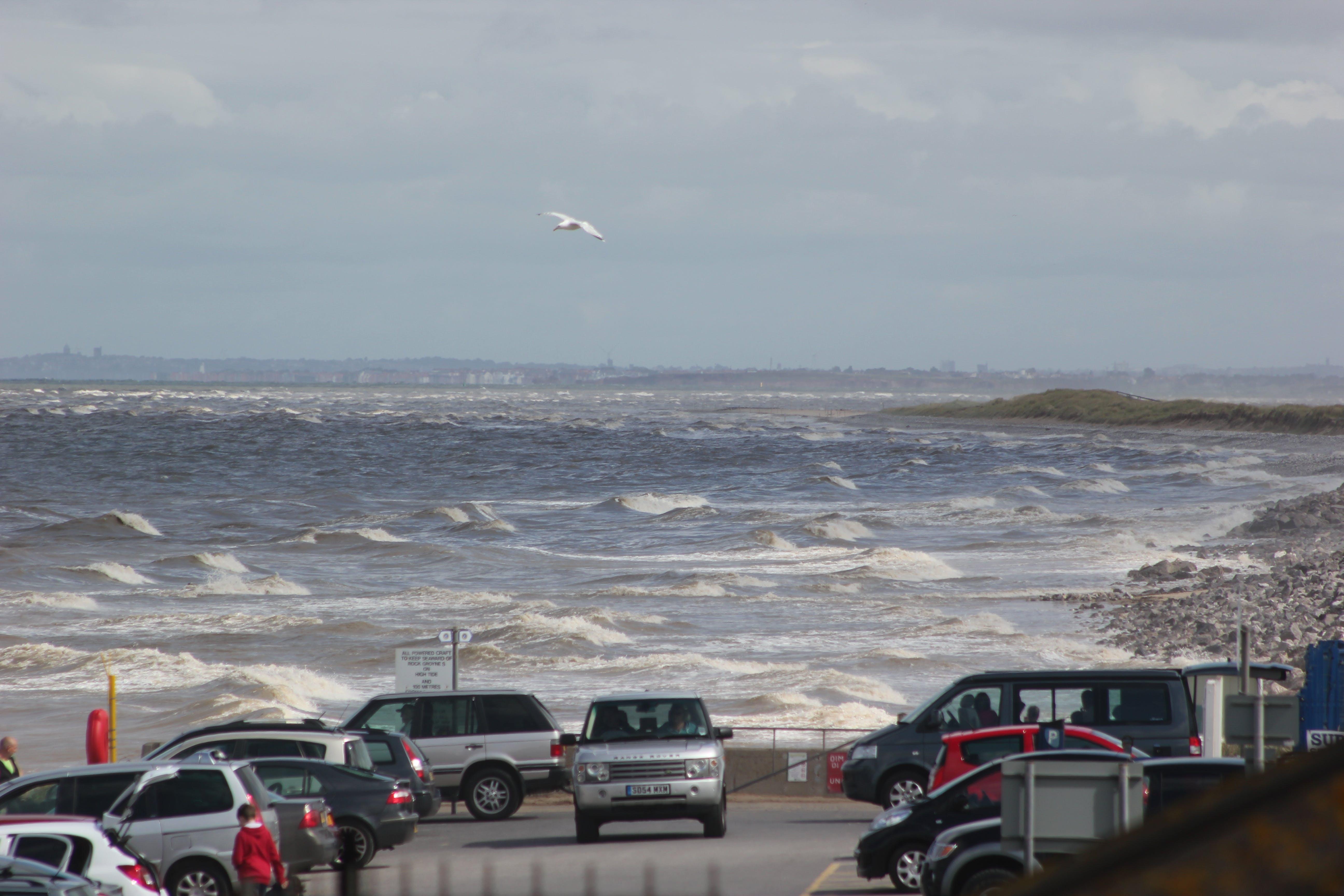 Free stock photo of beach, sea, seagulls, wave crashing