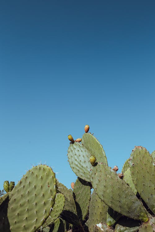 Gratis lagerfoto af blå, blå himmel, eksotisk, farve