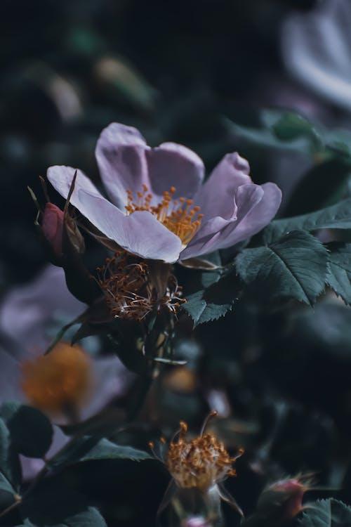 Blooming flower on shrub in garden