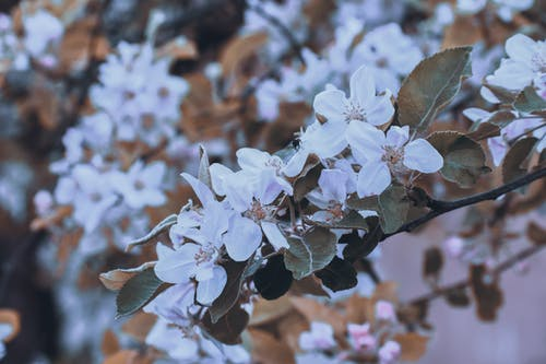 Closeup of fresh blooming flowers with leaves on twig of tree in summer park