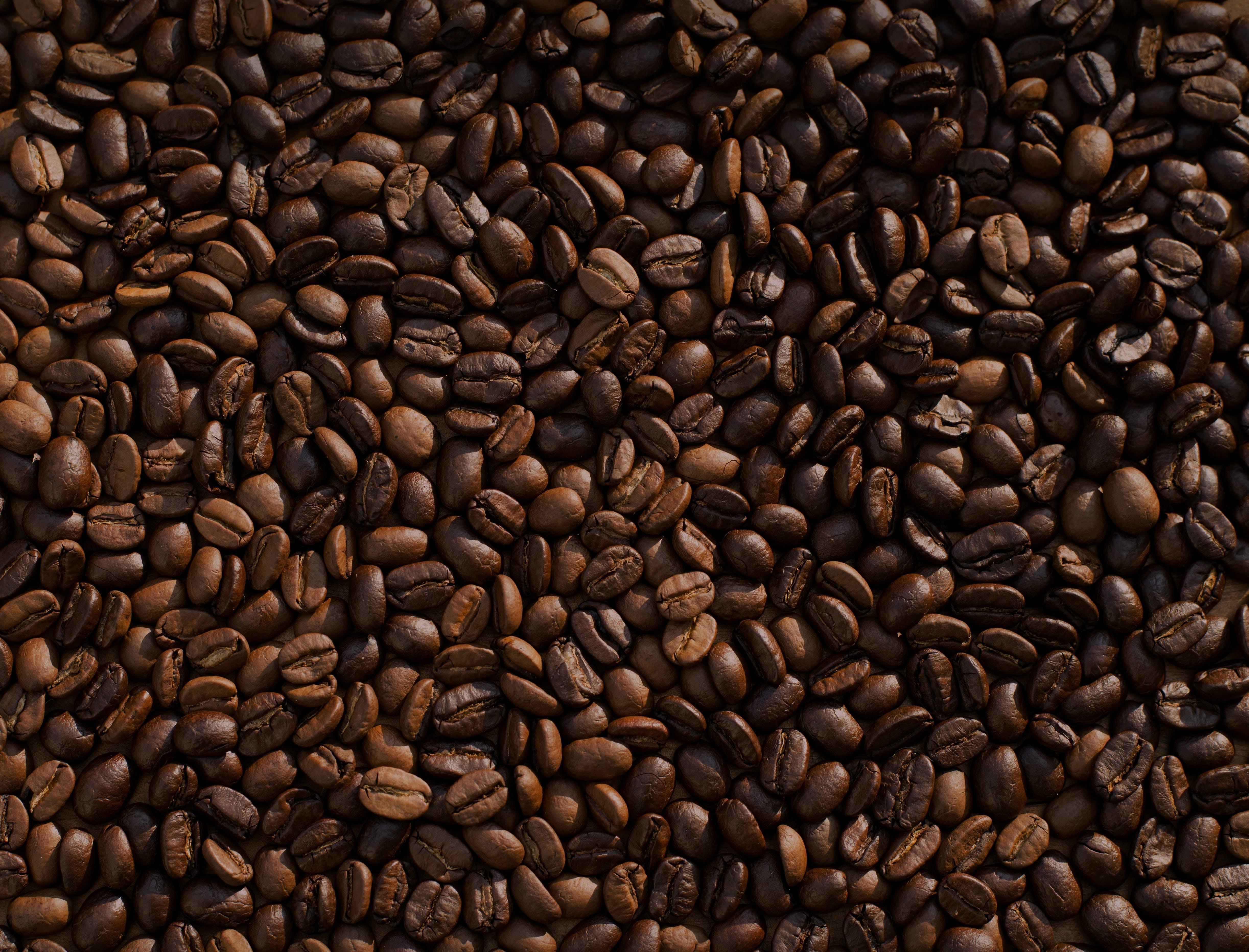 Free stock photo of beans, coffee, dark, brown