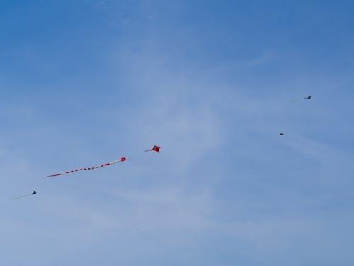 Free stock photo of kite, Kite flying, marina barrage, singapore