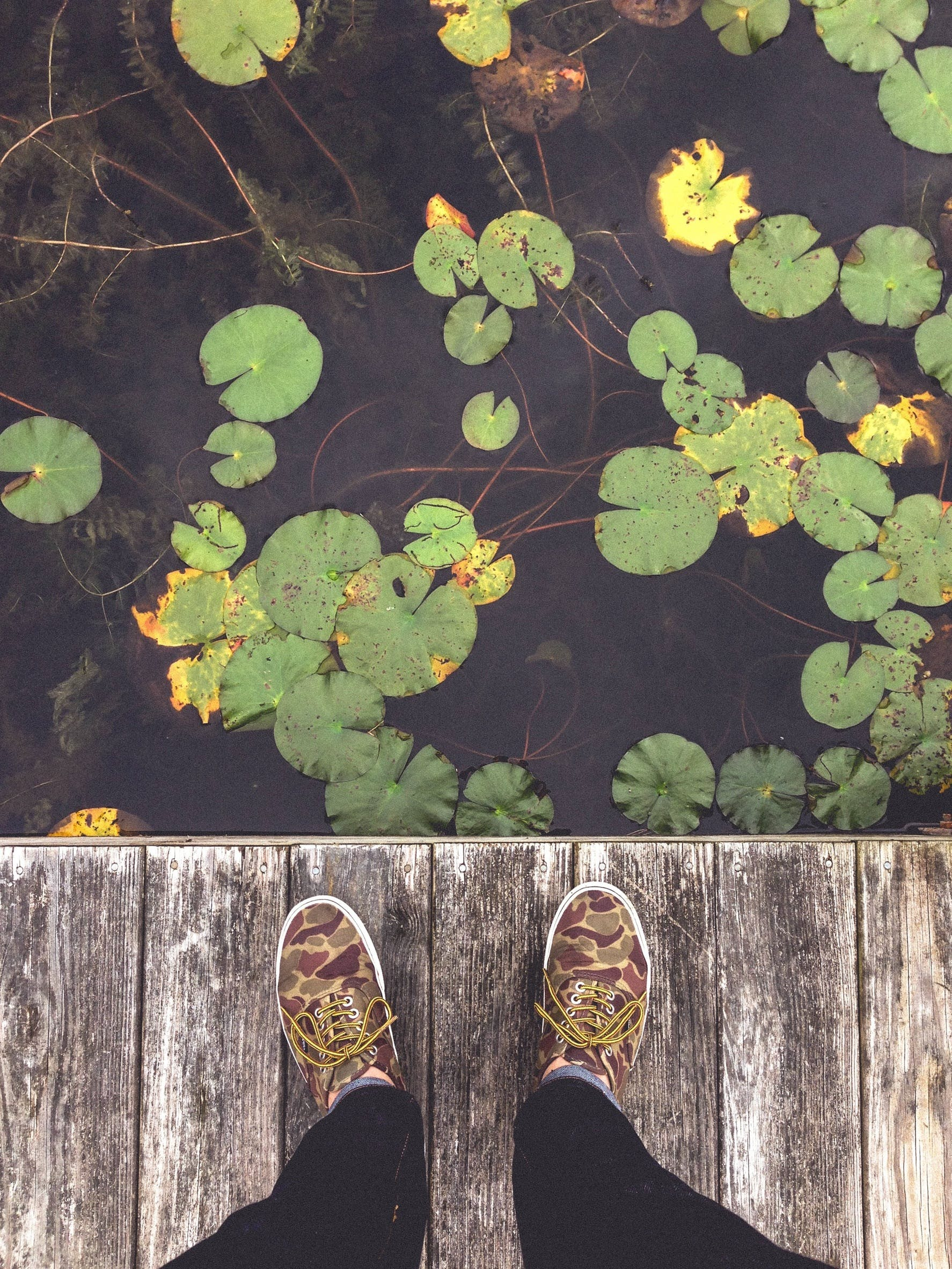 Free stock photo of water, lake, shoes, dock
