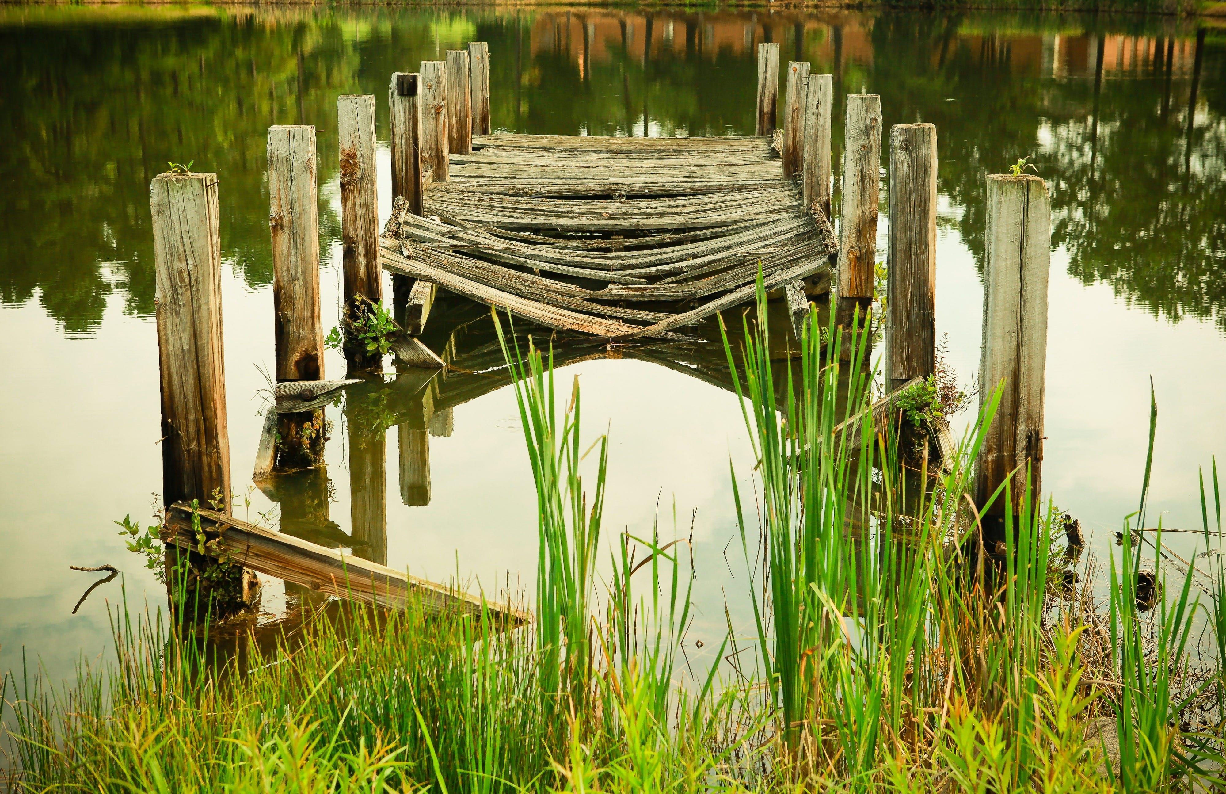 Free stock photo of board, bridge, grass, green