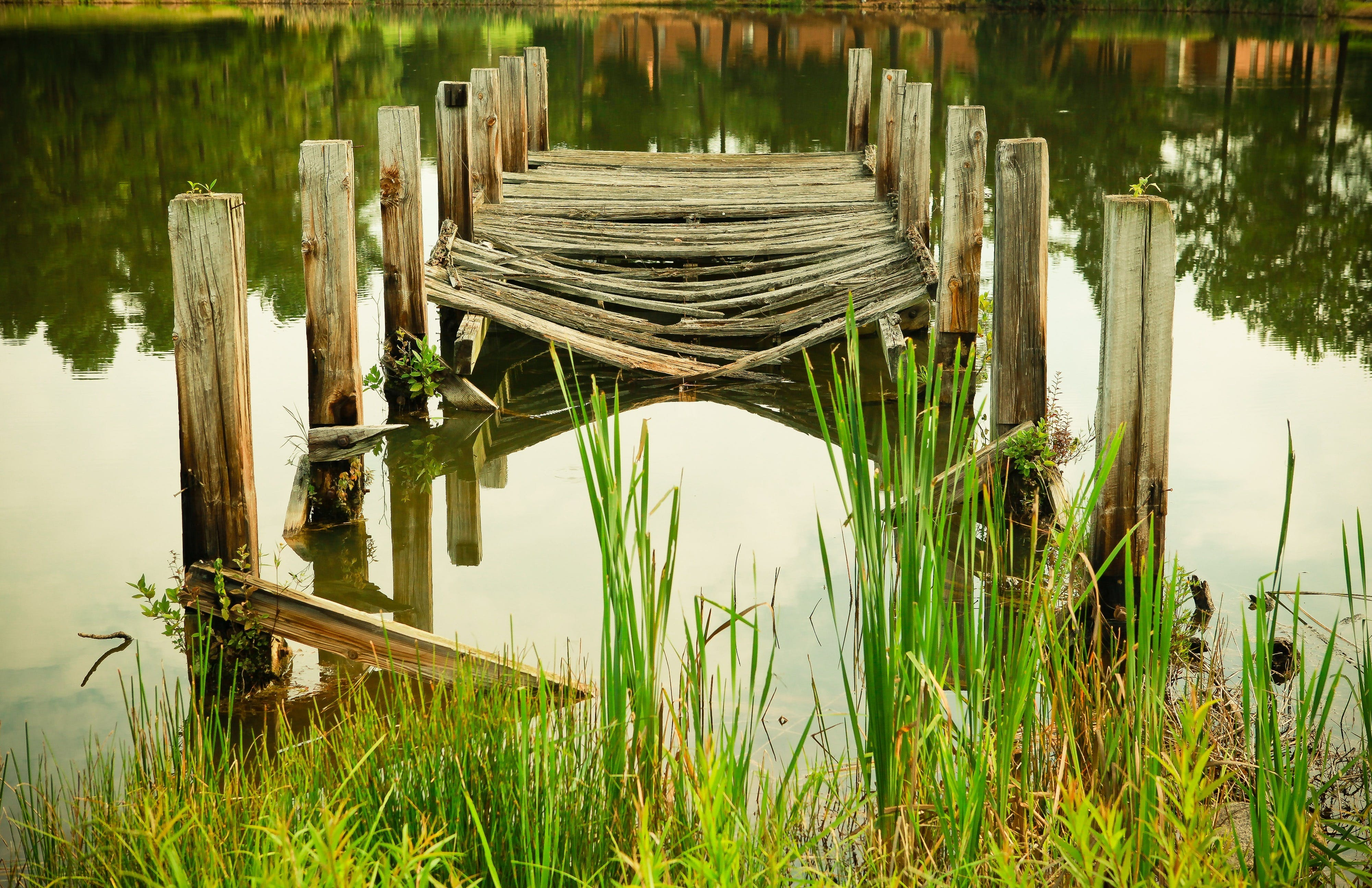Free stock photo of wood, landscape, nature, water