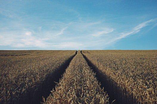 Free stock photo of field, agriculture, stripes