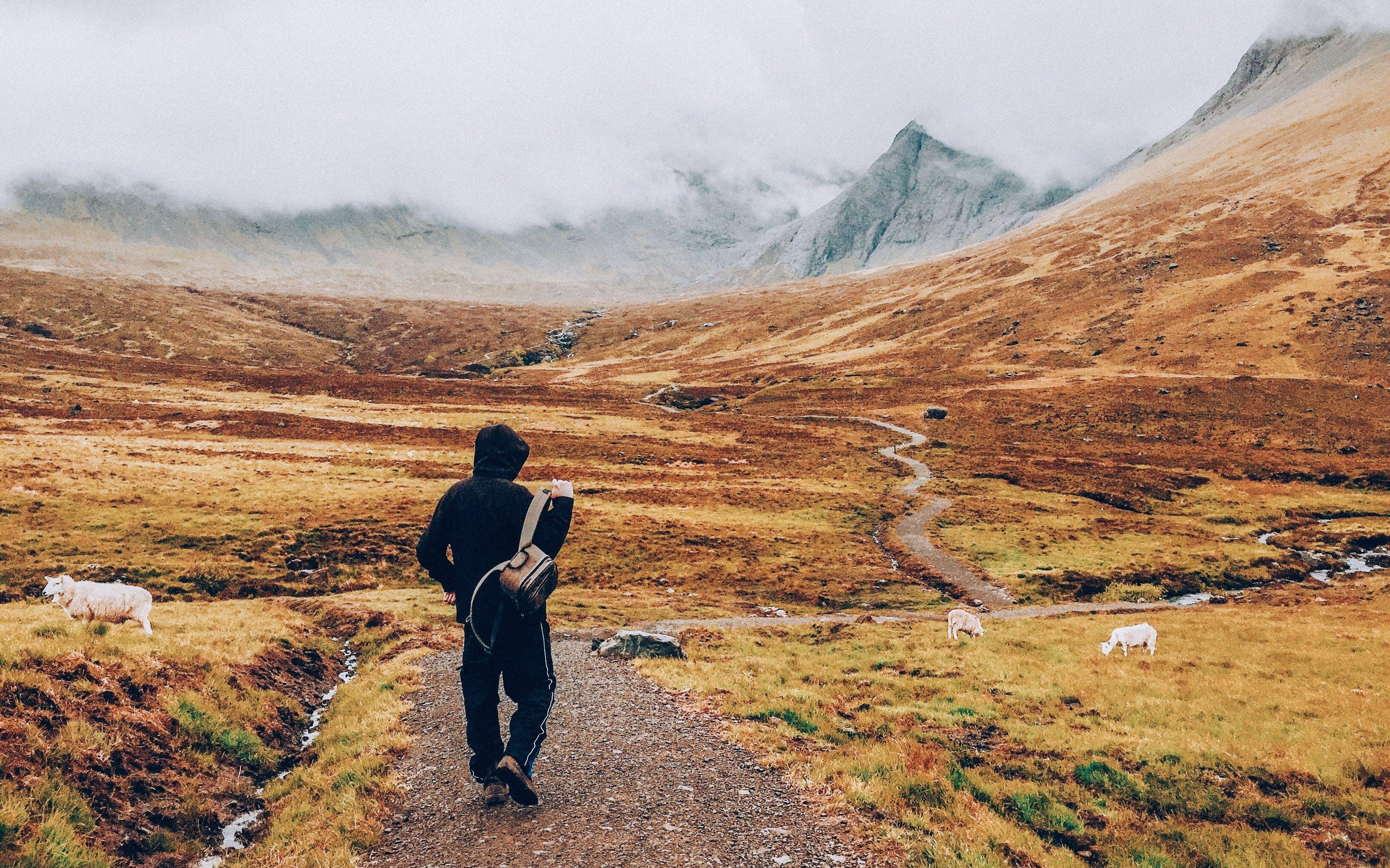 Man In Black Hoodie Walking On Path