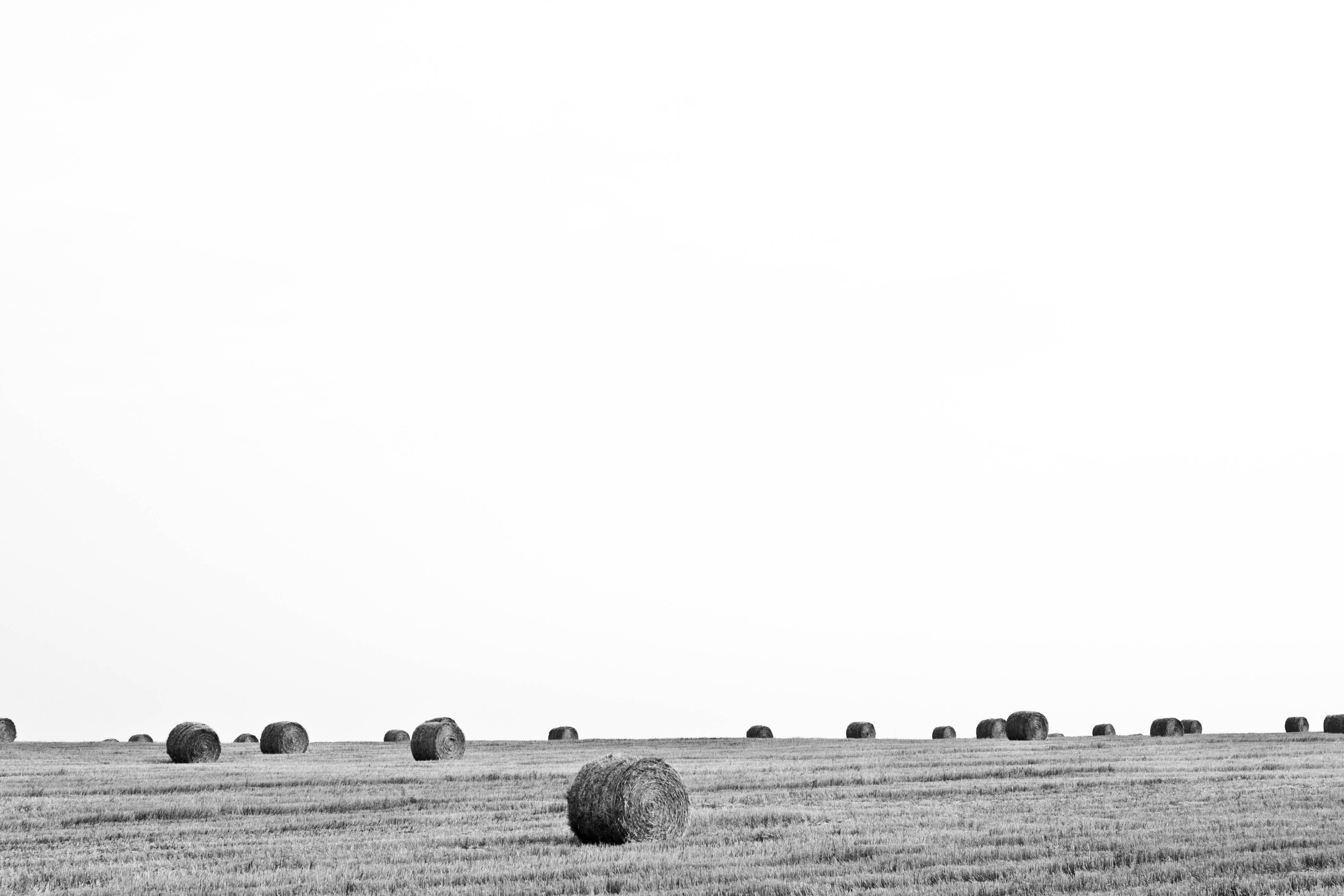 Free stock photo of black-and-white, sky, field, countryside