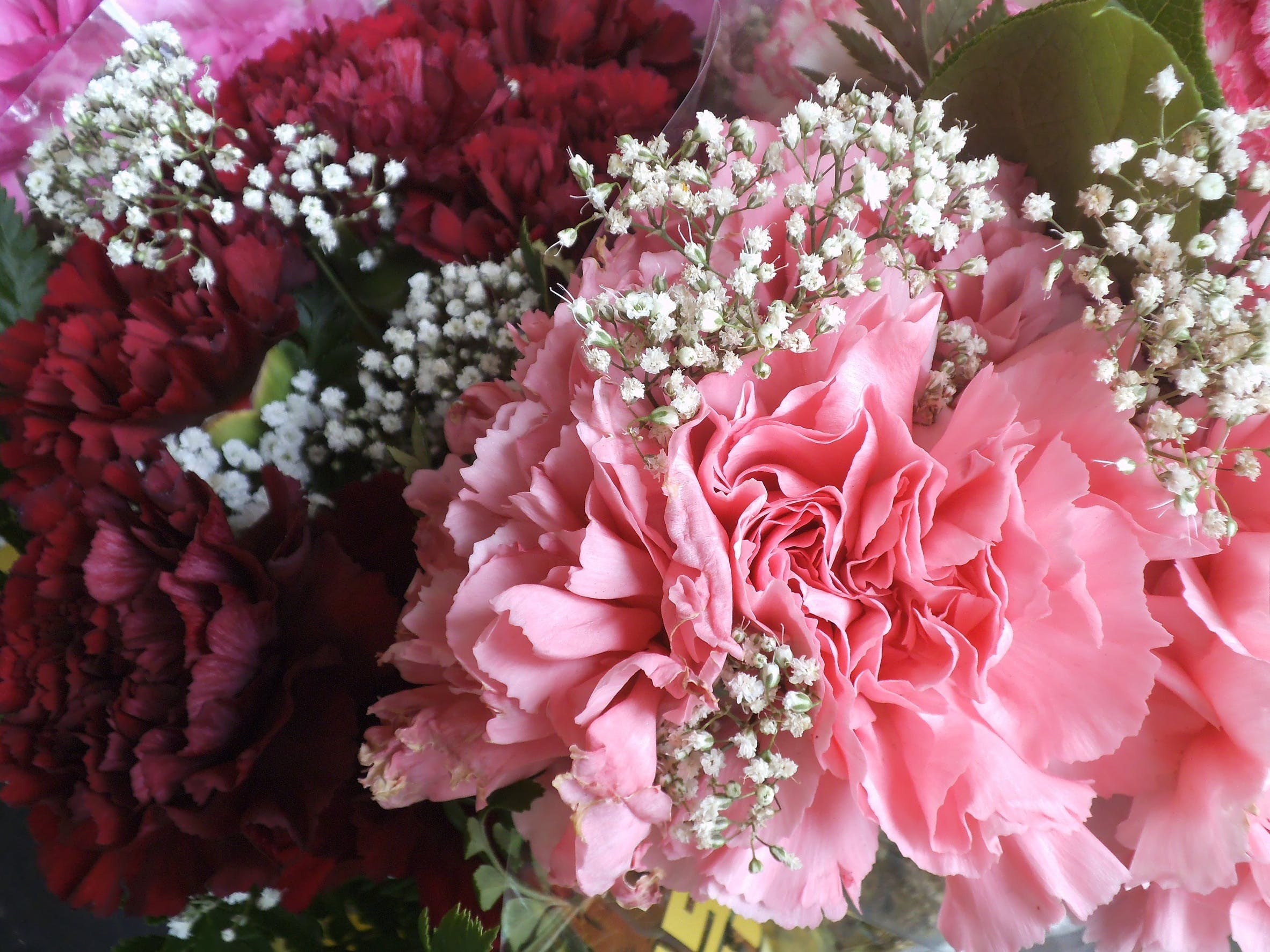 Free stock photo of love, romantic, petals, gift