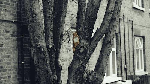Free stock photo of animals, squirrel, tree