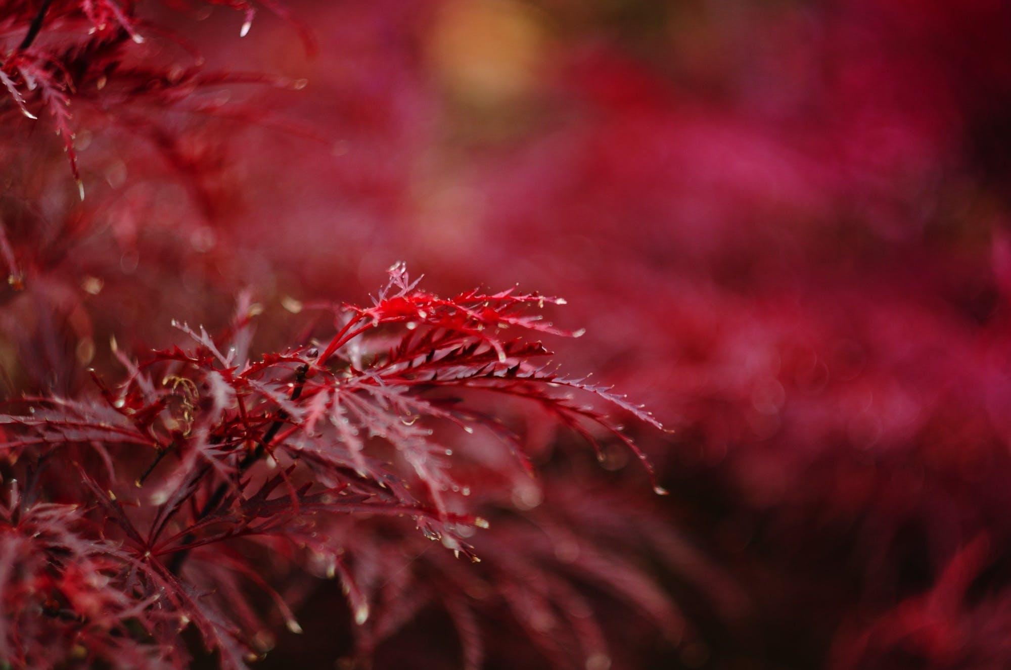 Free stock photo of autumn, closeup, color, decorative