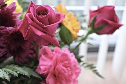 คลังภาพถ่ายฟรี ของ กระจุก, กลุ่ม, การจัดดอกไม้, การแต่งงาน