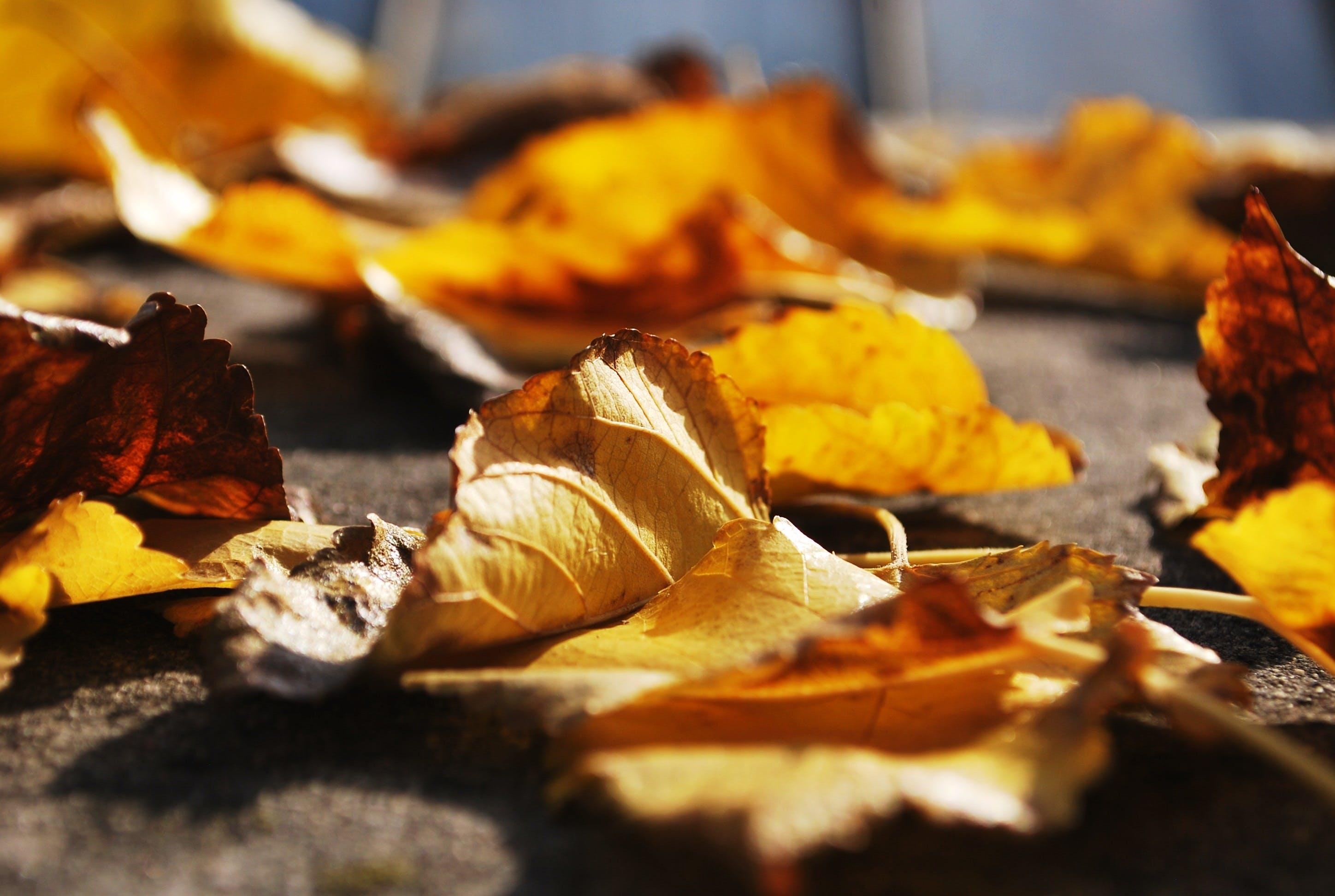 Free stock photo of autumn, brown, colorful, dry