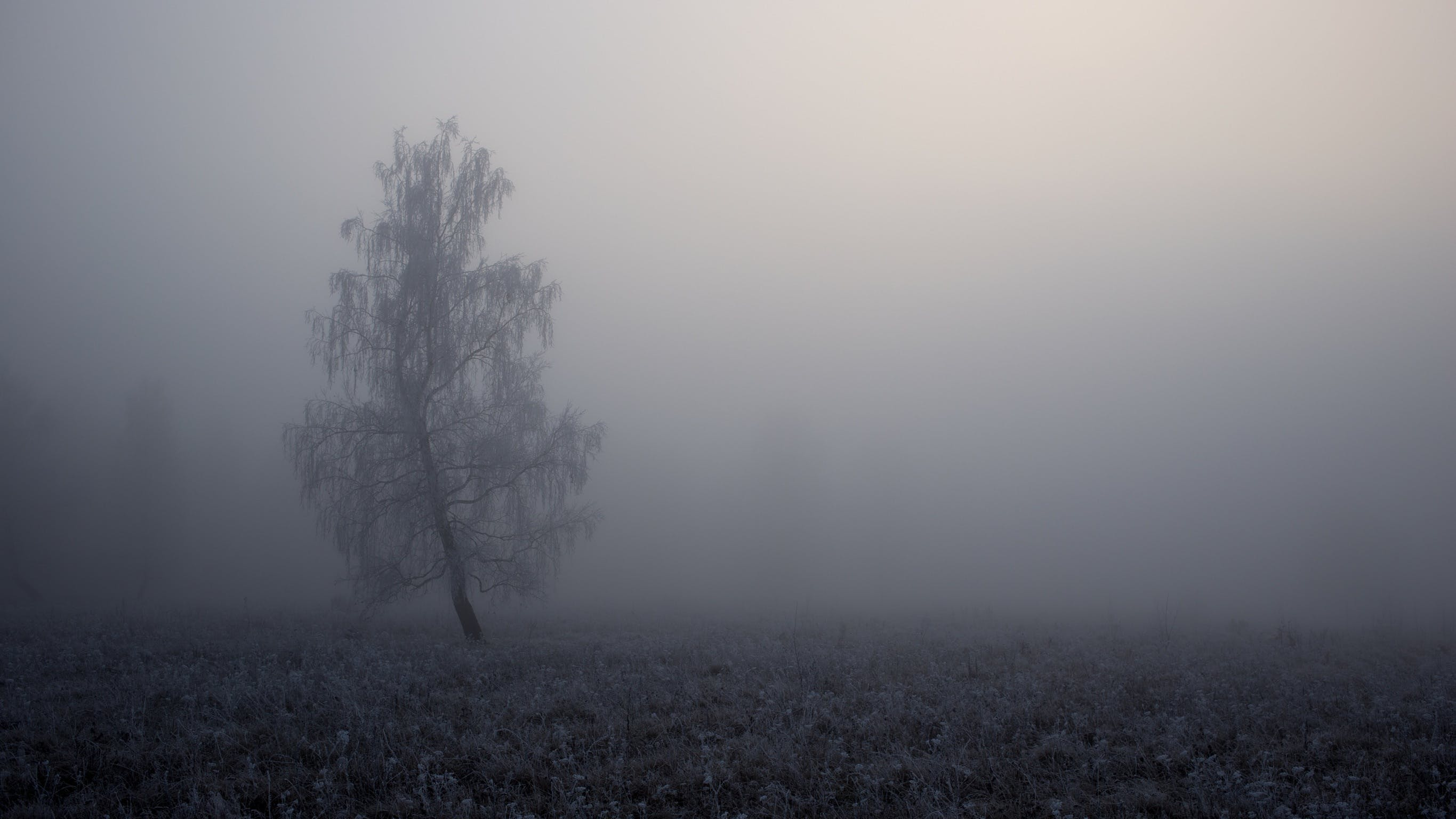 Grey Tree Covered by Fogs