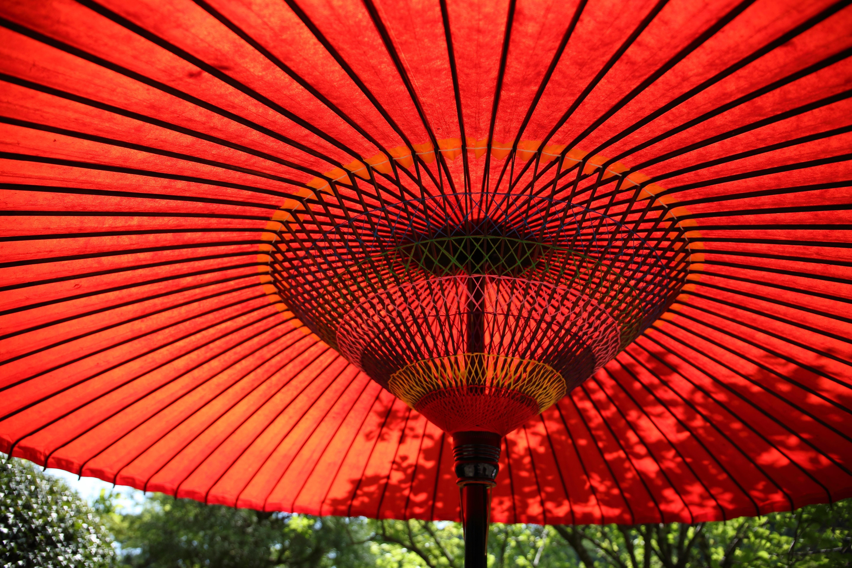 Kostenloses Foto zum Thema: bunt, farbenfroh, regenschirm