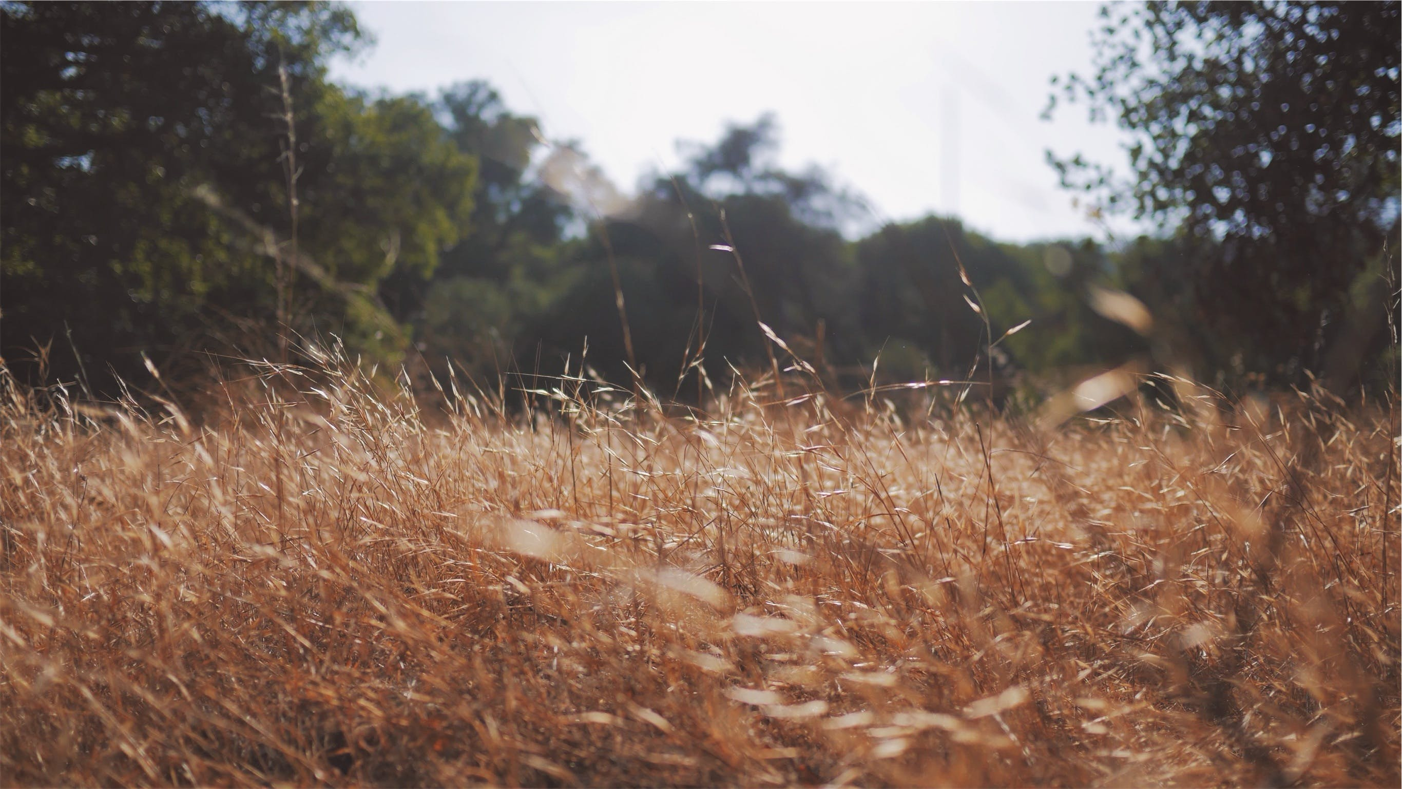 Free stock photo of nature, field, summer, dry
