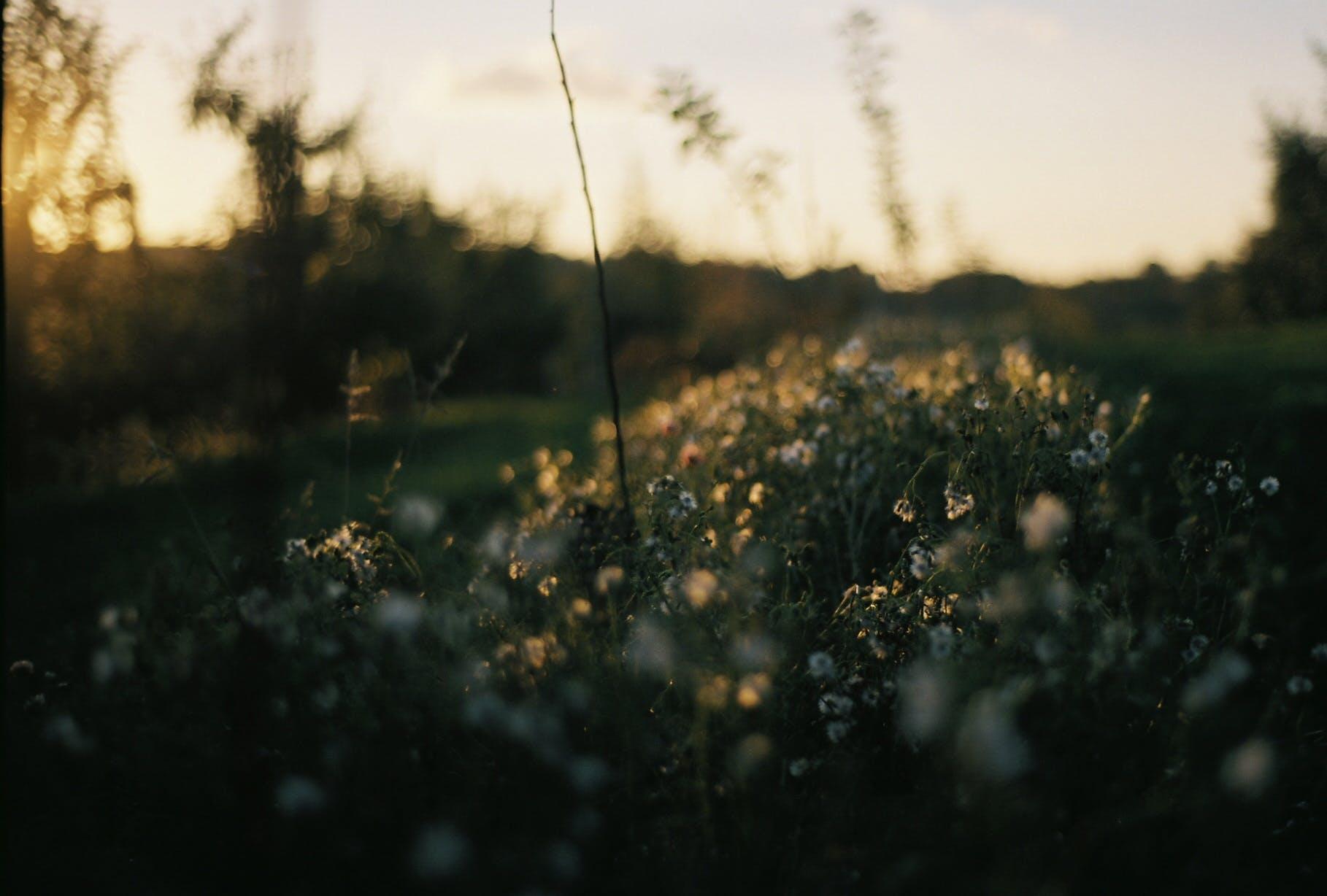 Free stock photo of nature, sunset, flowers, summer