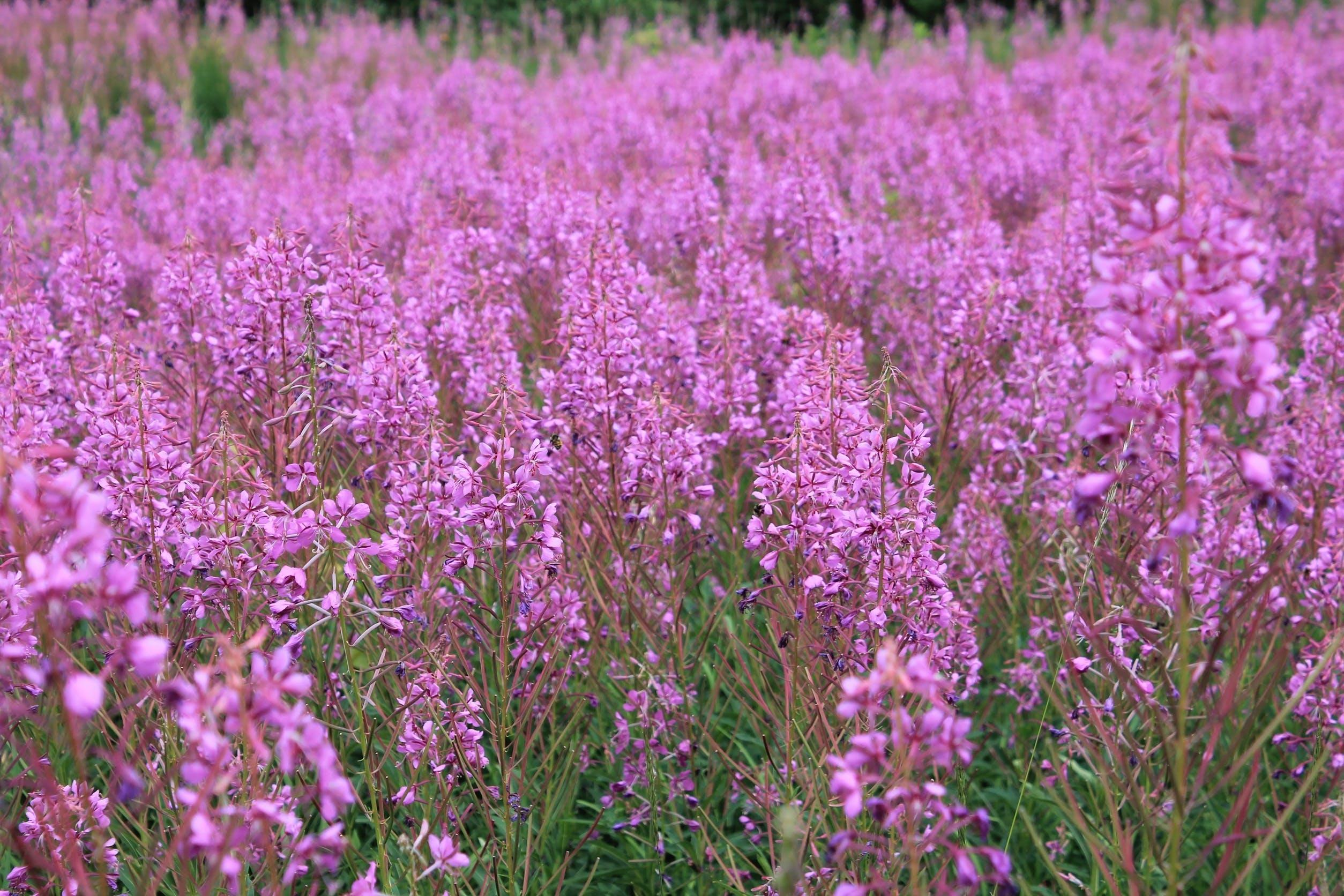 Free stock photo of blossom, botanical, botany, field