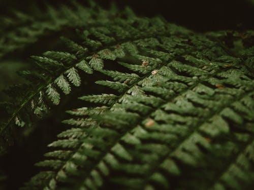 alan derinliği, bitki, bitki örtüsü içeren Ücretsiz stok fotoğraf