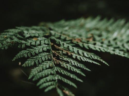 Foto stok gratis alam, berbayang, dari dekat, daun