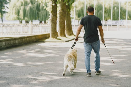 Man in Black T-shirt and Blue Denim Jeans Walking With his Dog