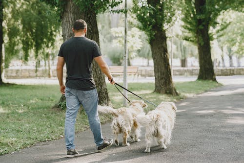 Man in Black T-shirt and Blue Denim Jeans Walking With his Dogs