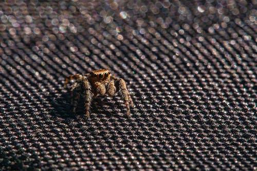 Spider on Black Textile