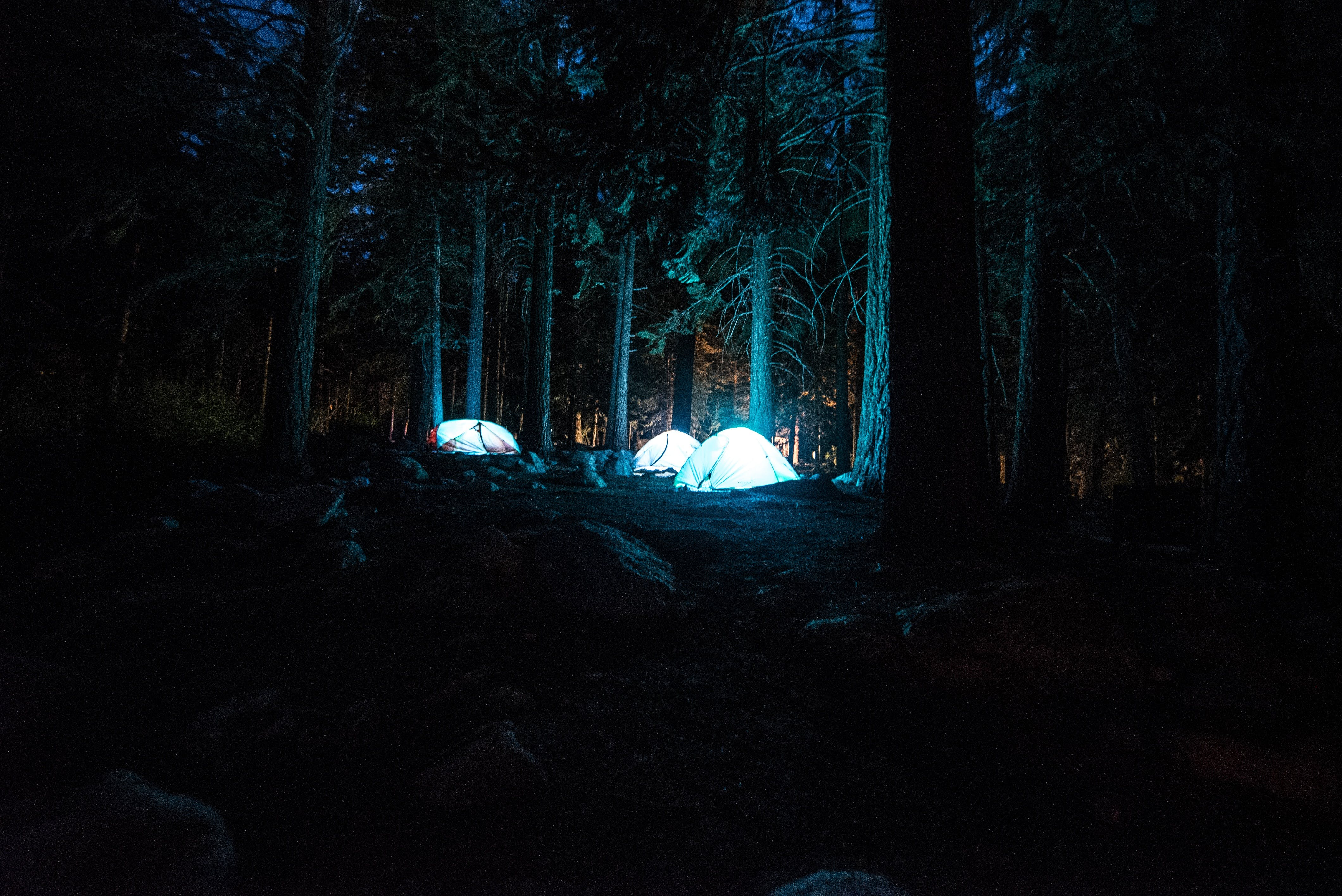 Free stock photo of nature, night, forest, evening