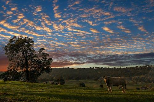 Gratis lagerfoto af bane, gård, græs, husdyr