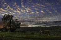 nature, clouds, field